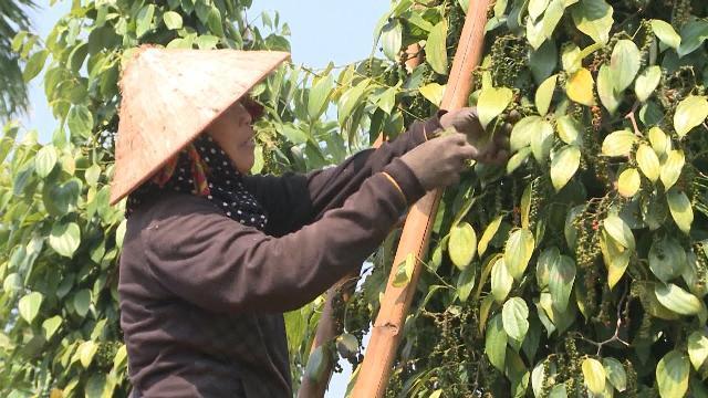 Tin Tức 24h Mới Nhất: Nan giải bài toán cây trồng vượt quy hoạch