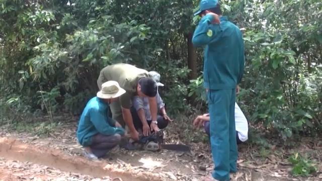TIn Tức 24h Mới Nhất: Than tặc phá rừng đốt than ở Quảng Ngãi
