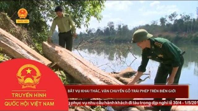 Thời sự - Gia Lai: Bắt vụ khai thác, vận chuyển gỗ trái phép trên biên giới