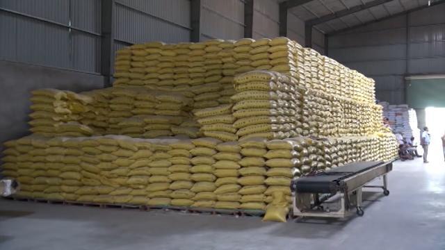 Tin Tức 24h Mới Nhất: Bỏ nhiều điều kiện để được xuất khẩu gạo