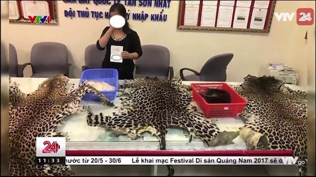 Hải Quan Tân Sơn Nhất Phát Hiện, Thu Giữ 4kg Ngà Voi - Tin Tức VTV24