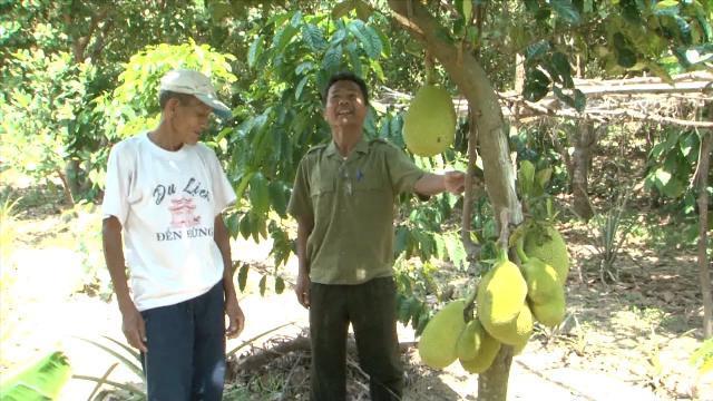 Đồng bào Raglai xã Phước Chiến, Ninh Thuận thoát nghèo từ nội lực