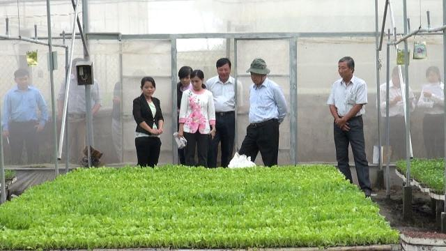 Tân Châu đẩy mạnh ứng dụng công nghệ cao vào sản xuất nông nghiệp