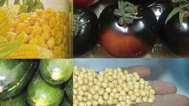 Phóng Sự: Thực phẩm biến đổi gen GMO có an toàn hay không?