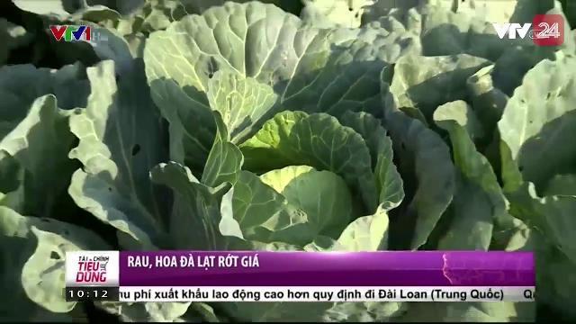 Rau, hoa màu tại Đà Lạt rớt giá mạnh | VTV24