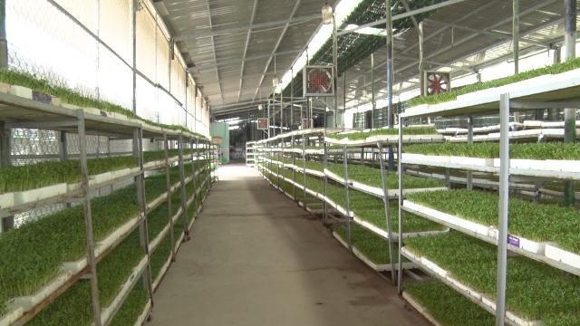 TP. Hồ Chí Minh phát triển mô hình trồng rau sạch theo tiêu chuẩn VietGAP