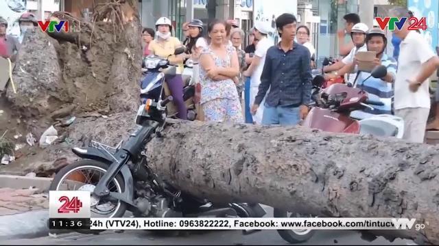 Cây xanh bật gốc, đè nát 2 xe máy | VTV24