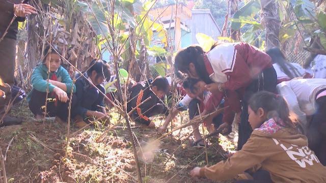Quảng Nam: Bảo tồn và phát triển cây dược liệu từ trường học