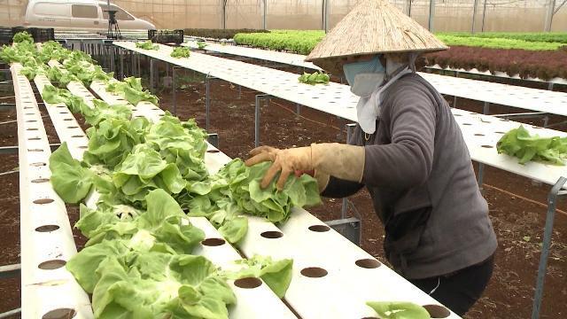 Tin Tức 24h Mới Nhất: Đẩy mạnh phát triển nông nghiệp hữu cơ