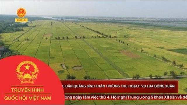 Thời sự - Bà con nông dân Quảng Bình khẩn trương thu hoạch vụ lúa đông xuân
