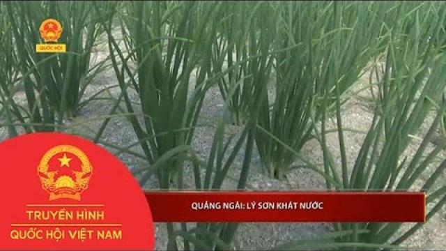 Quảng Ngãi: Lý Sơn khát nước | Thời Sự | THQHVN