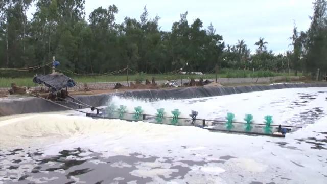 Tin Tức 24h: Hơn 5,7 ha tôm vụ 1 bị dịch bệnh trên địa bàn Nghệ An