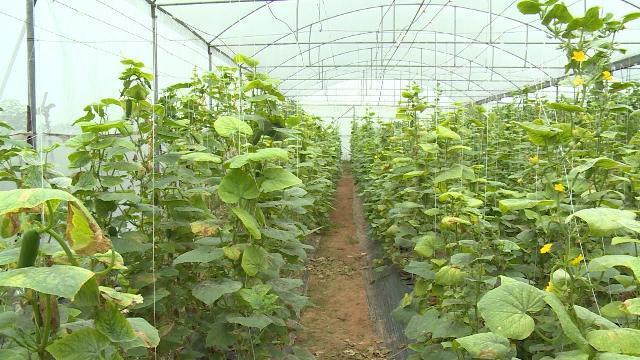 Tháo gỡ vướng mắc trong ngành nông nghiệp công nghệ cao ở Hà Nội