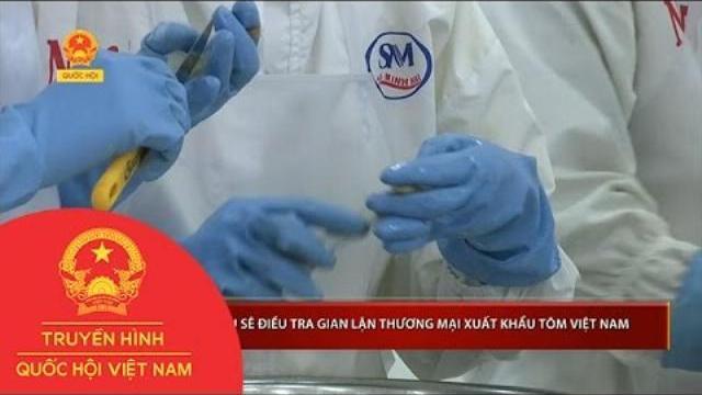 Thời sự - Châu Âu sẽ điều tra gian lận thương mại xuất khẩu tôm Việt Nam