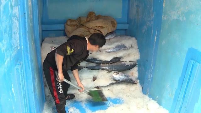 Tin tức 24h: Ngư dân Hà Tĩnh được mùa khai thác