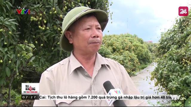 Bí quyết tạo nên những quả vải thiều Thanh Hà ngon mà lại an toàn | VTV24