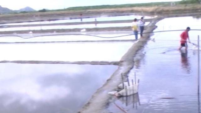 Mô hình nuôi ấu trùng artemia kết hợp sản xuất muối tại Ninh Thuận
