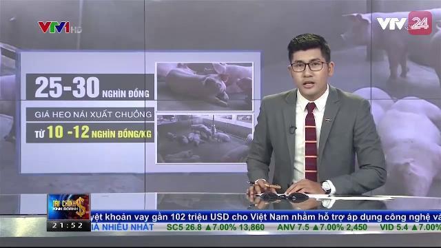 Bộ NN&PTNT Kiến Nghị Thủ Tướng Các Biện Pháp Hỗ Trợ Người Chăn Nuôi Heo - Tin Tức VTV24