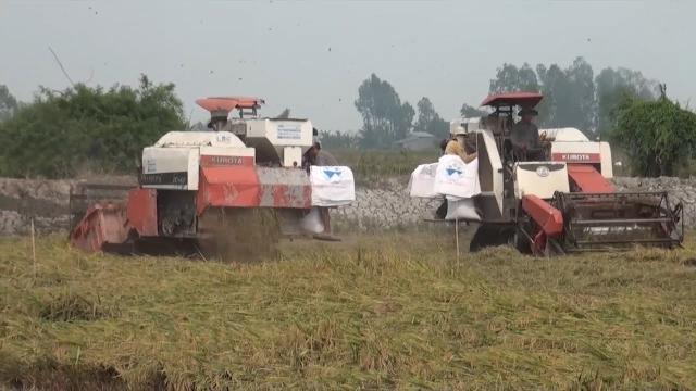 Ứng dụng KHCN để nâng cao năng suất và sản lượng trong sản xuất nông nghiệp