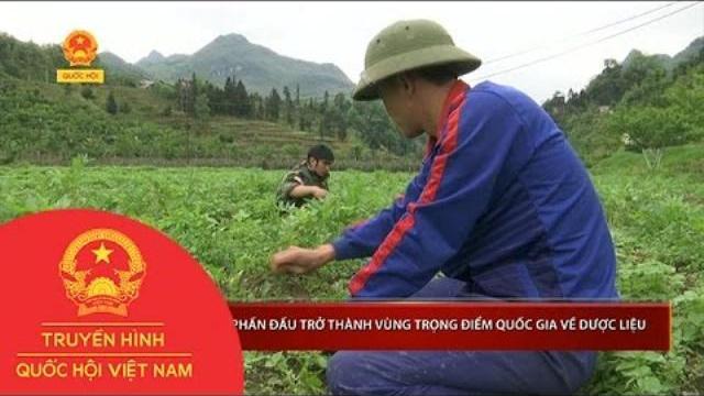 Hà Giang phấn đấu trở thành vùng trọng điểm quốc gia về dược liệu