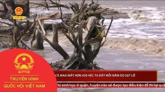 Thời sự - Cà Mau - mất hơn 450 héc ta đất mỗi năm do sạt lở