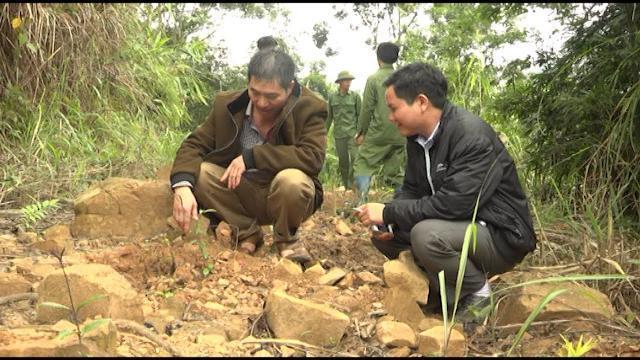 Tin Tức 24h: Lạng Sơn phát triển cây dược liệu