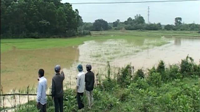 Mưa lớn từ thượng nguồn gây ngập hàng chục ha lúa đông xuân ở Quảng Trị