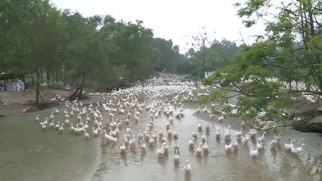 Mô hình chăn nuôi gia cầm khép kín 30 năm không xảy ra dịch bệnh ở Quảng Trị