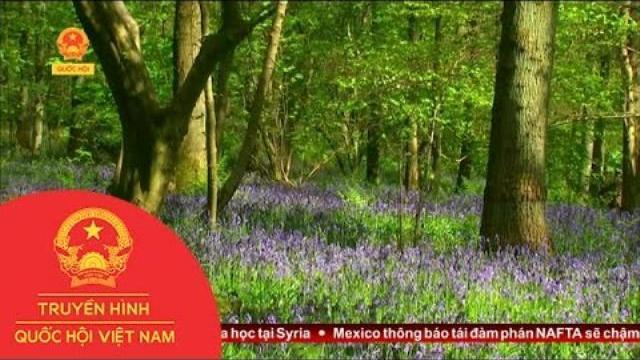 Thời sự - Những Cánh Hoa Mùa Xuân Phủ Khắp Châu Âu