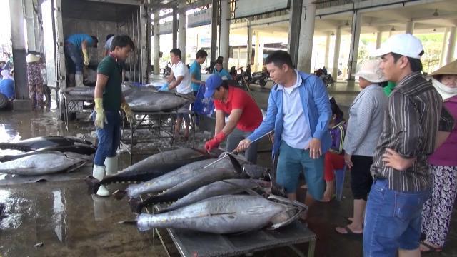 Tin Tức 24h: Cá ngừ Việt Nam có mặt tại 66 thị trường thế giới