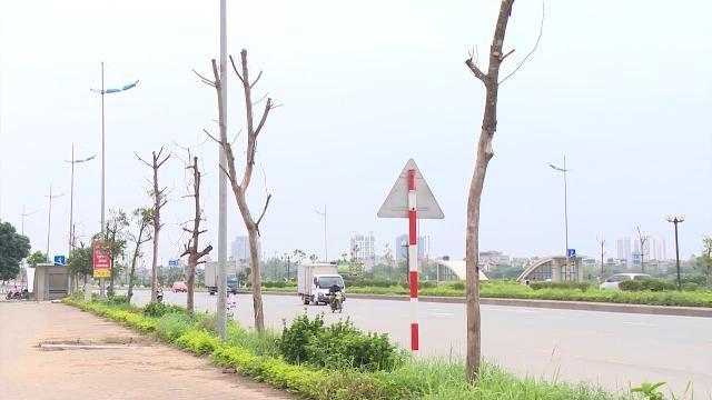 Tin Tức 24h Mới Nhất: Nhiều cây xanh chết khô trên vỉa hè Hà Nội