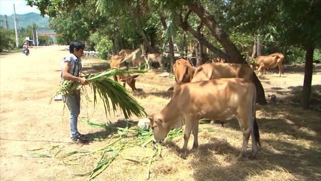 Ninh Thuận mở hướng giúp đồng bào Raglai vươn lên thoát nghèo