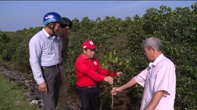 Tin Tức 24h Mới Nhất: Hà Tĩnh phát triển diện tích rừng ngập mặn