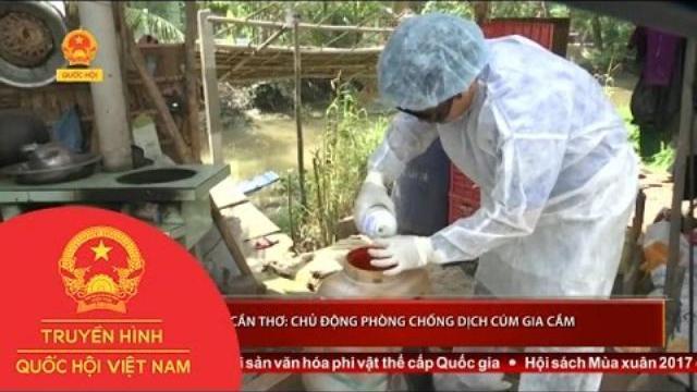 Thời sự - Cần Thơ: Chủ động phòng chống dịch cúm gia cầm