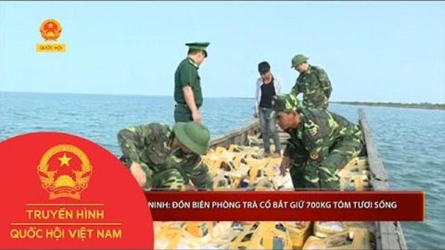 Quảng Ninh: Đồn Biên phòng Trà Cổ bắt giữ 700kg tôm tươi sống