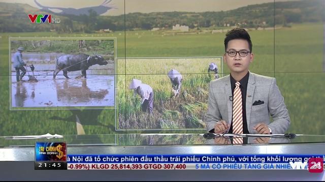 100 ngàn tỷ đồng để thúc đẩy nông nghiệp công nghệ cao | VTV24