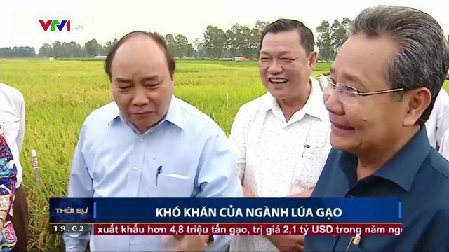 Thủ tướng Nguyễn Xuân Phúc theo dõi sự khó khăn của ngành lúa gạo