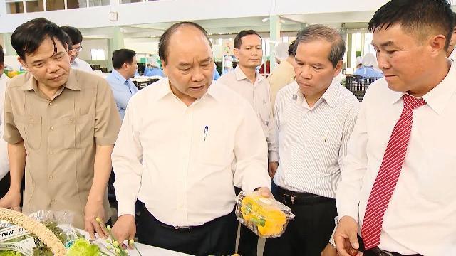 Thủ tướng Nguyễn Xuân Phúc thăm mô hình sản xuất rau an toàn tại Lâm Đồng
