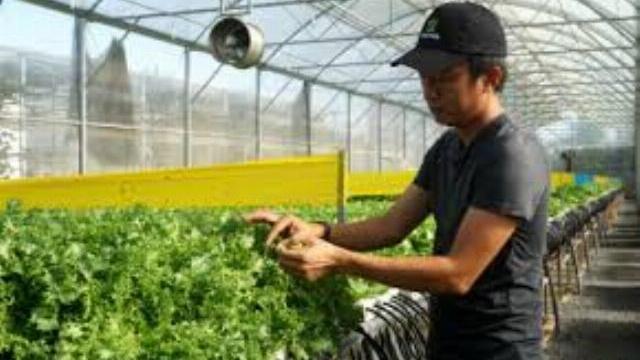 Đạo diễn truyền hình trồng rau sạch kiếm hơn 200 triệu mỗi tháng
