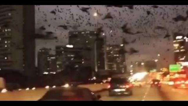 Hàng ngàn con chim 'tấn công' đường phố Mỹ, chuyện gì đang xảy ra?