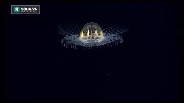 Sinh vật hình đĩa bay, phát sáng như UFO dưới biển sâu
