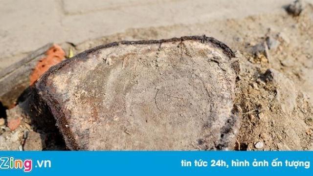 Dân Hà Nội xin để lại cây xanh, lãnh đạo xã quyết chặt để dẹp vỉa hè - Thời sự - Zing.vn