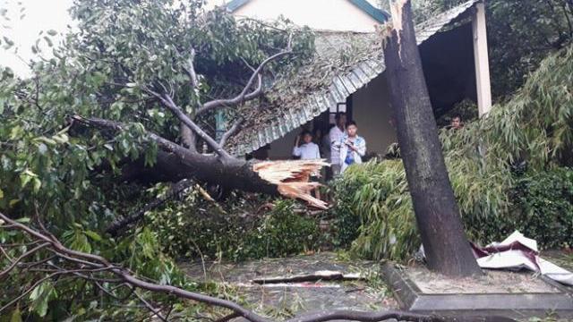 Hơn 500 nhà tốc mái, cây đổ hàng loạt sau lốc xoáy