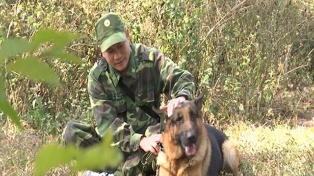 Những chú chó tinh khôn đánh án ở vùng biên