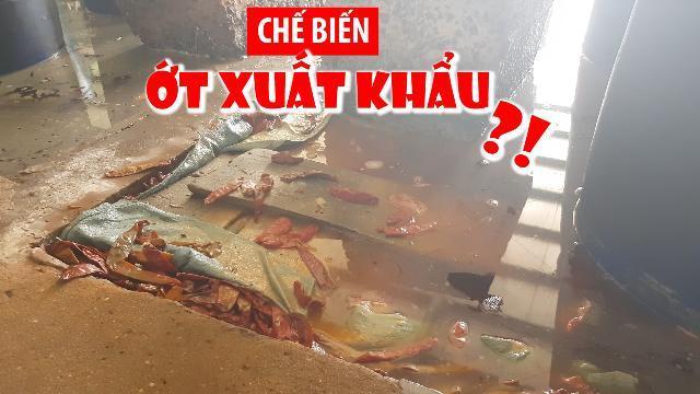 Chế biến ớt xuất khẩu trong hồ đầy côn trùng chết và phân súc vật