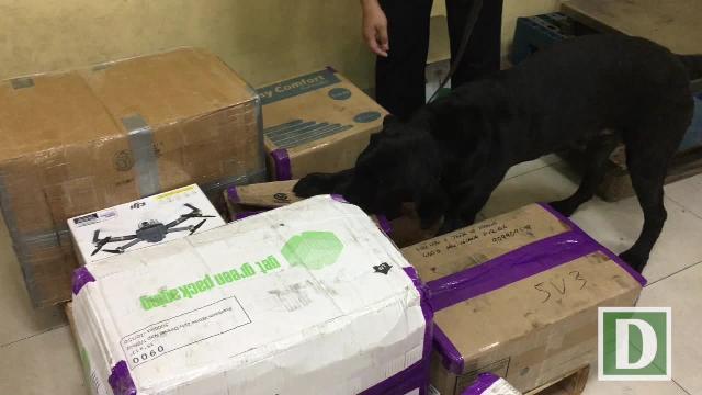 Xem chó nghiệp vụ tìm ma túy ở sân bay Tân Sơn Nhất