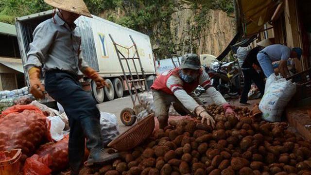 Gian thương bán khoai tây Trung Quốc 'đội lốt' khoai Đà Lạt, lừa người tiêu dùng