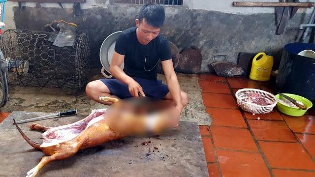 Tai nạn khiến chủ lò mổ chó 'xanh mặt', lập tức bỏ nghề