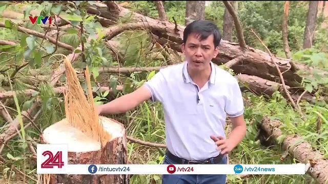Một vụ phá rừng táo tợn tại huyện Lâm Hà, tỉnh Lâm Đồng