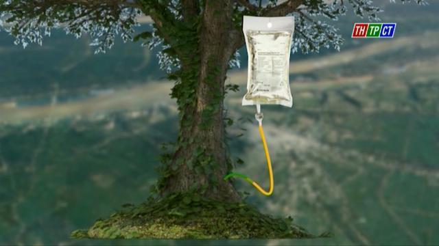 Trà Vinh truyền dịch cứu 1.000 cây cổ thụ
